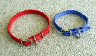 Collar - Webbing  - medium