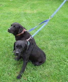 Lead - Twin extension  - medium size dog