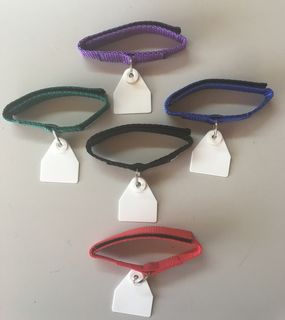 Neck Tags - multi coloured pack